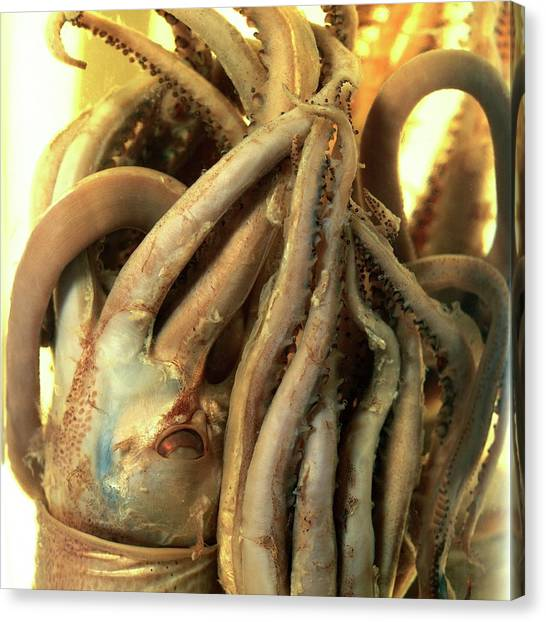 Squids Canvas Print - Preserved Squid by Natural History Museum, London/science Photo Library