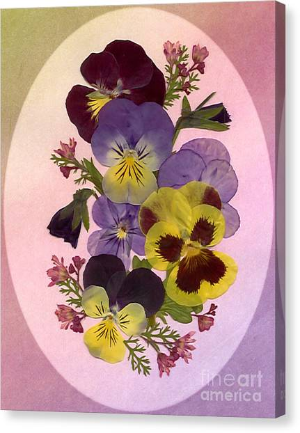 Pressed Pansies Canvas Print