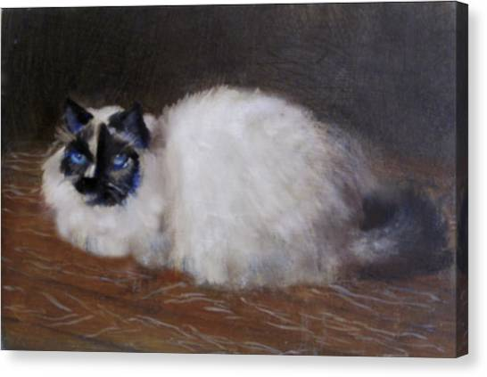 Himalayan Cats Canvas Print - Pretty Blue Eyes by David Zimmerman