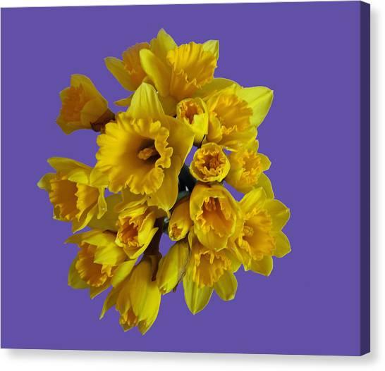 Pretty Daffodils Canvas Print