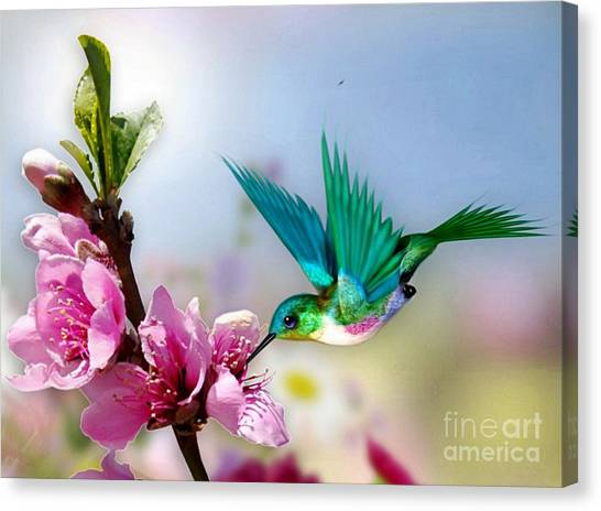 Pretty Hummingbird Canvas Print