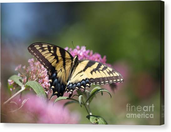 Pretty In Pink All Profits Go To Hospice Of The Calumet Area Canvas Print