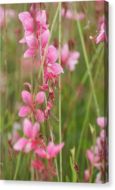 Pretty In Pink Canvas Print by Joe Bledsoe