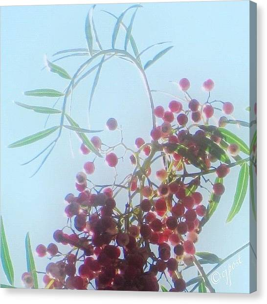 Berries Canvas Print - Pretty In Pink Peruvian American by Cynthia Post