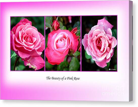 Pretty In Pink Roses Canvas Print by Jo Collins