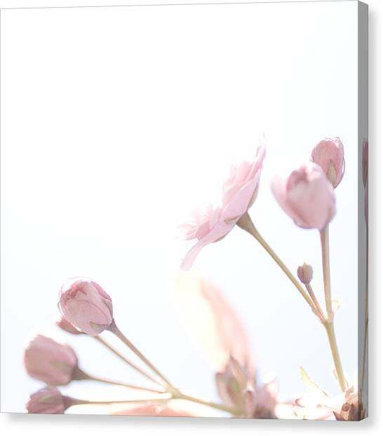Pretty In Pink - The Dreamer Canvas Print