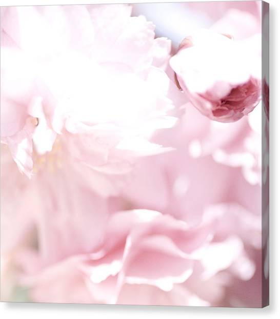 Pretty In Pink - The Sweet One Canvas Print