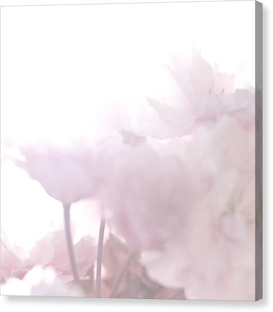 Pretty In Pink - The Whisper Canvas Print