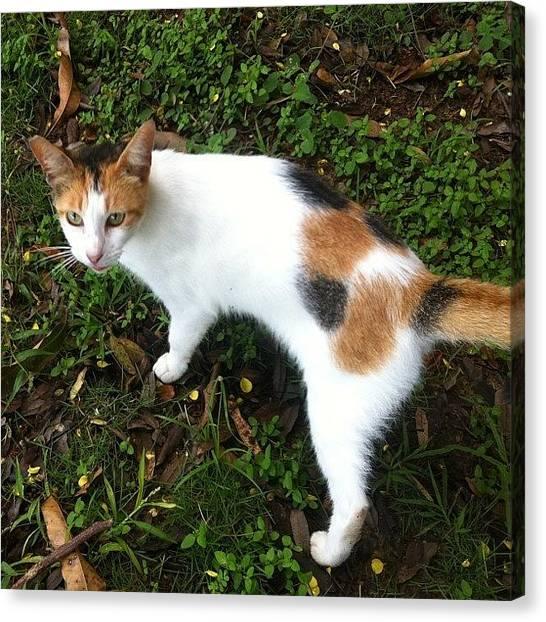 Spam Canvas Print - Pretty Kitty <3 #like #love #likes by Zoe Sutter