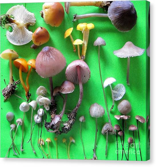 Pretty Little Mushrooms Canvas Print