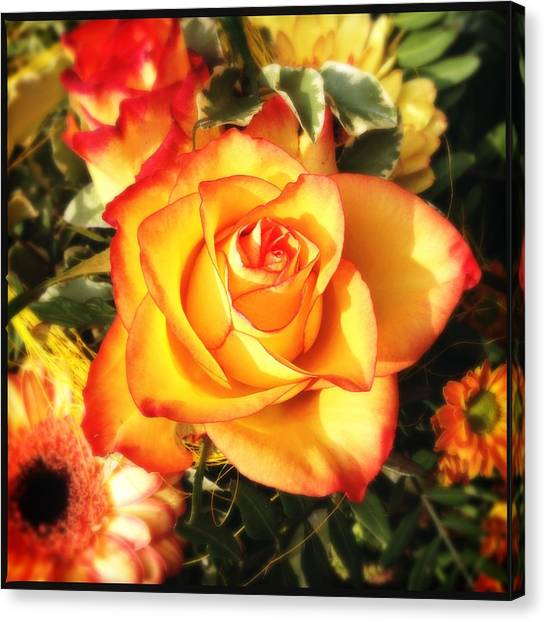 Roses Canvas Print - Pretty Orange Rose by Matthias Hauser