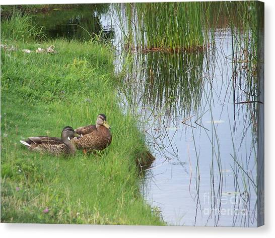 Mated Pair Of Ducks Canvas Print