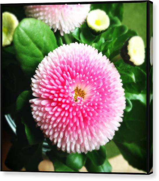 Green Canvas Print - Pretty Pink Flower by Matthias Hauser