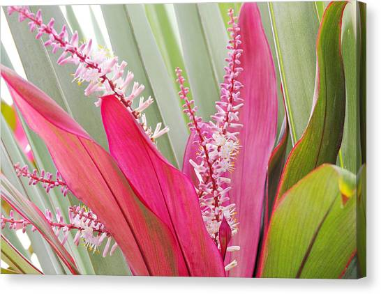 Pretty Pink In Key West Canvas Print