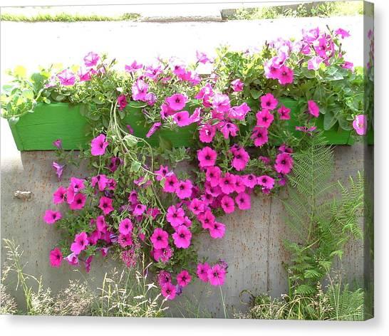 Canvas Print - Pretty Pink Petunias by Christine Rivers