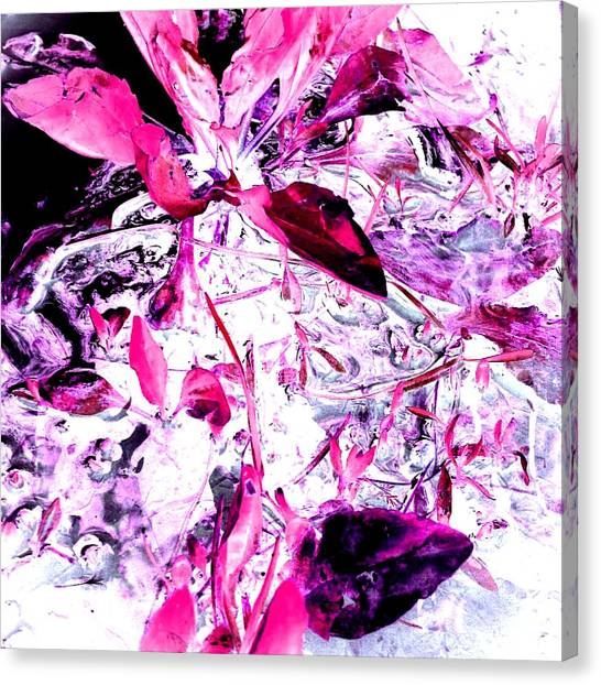 Pretty Pink Weeds 6 Canvas Print