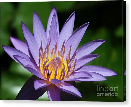 Pretty Purple Petals Canvas Print