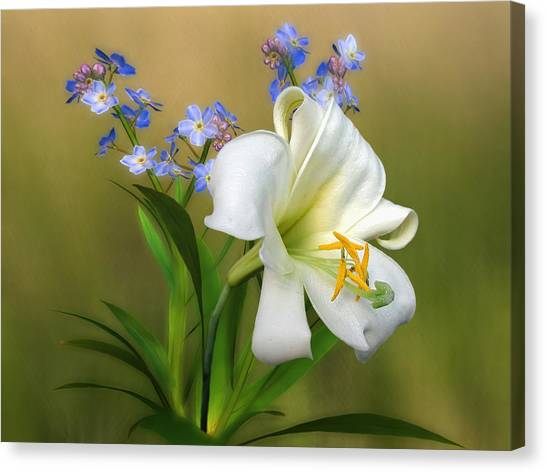 Pretty White Lily Canvas Print