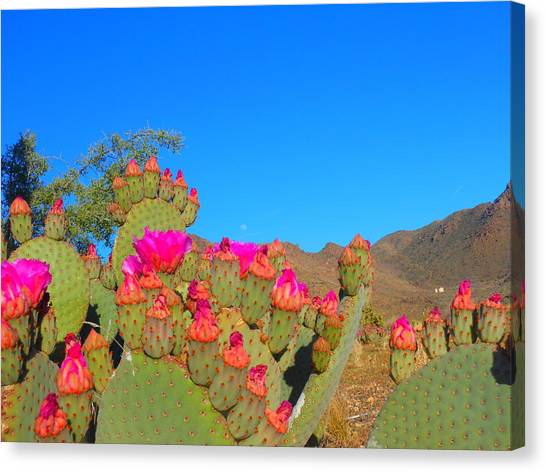 Prickly Pear Blooming Canvas Print