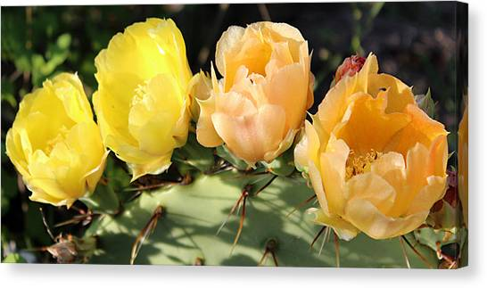 Prickly Pear No. 2 Canvas Print