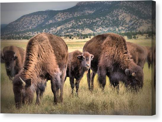 Pride Of The Herd Canvas Print