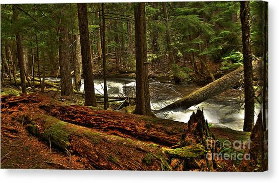 Pristine Forest Canvas Print