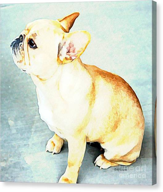 Profile In Frenchie Canvas Print