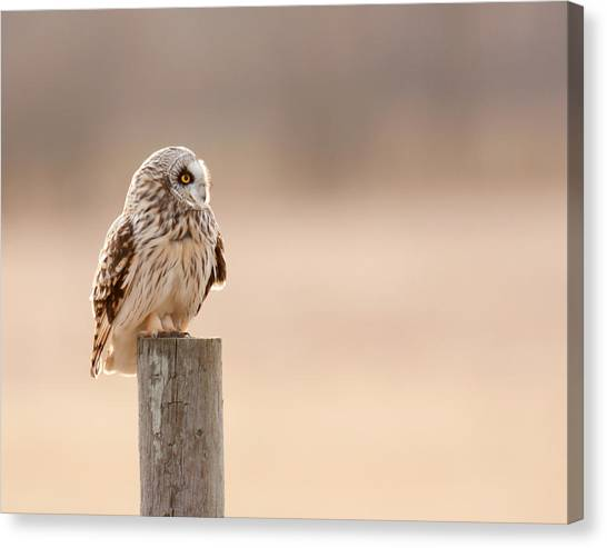 Profile Of A Short-eared Owl 1 Canvas Print