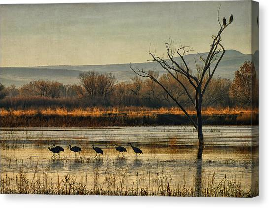 Promenade Of The Cranes Canvas Print