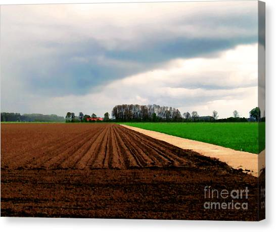 Promissing Field Canvas Print
