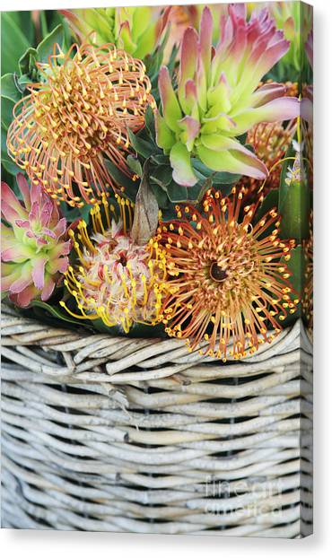 Pin Cushions Canvas Print - Protea Basket by Neil Overy