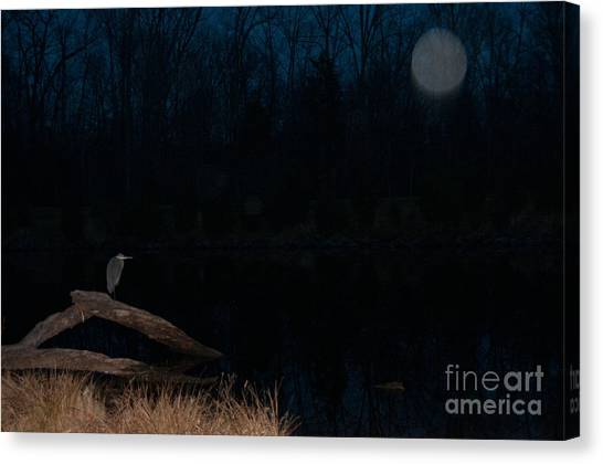 Protecting The Protector Canvas Print
