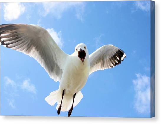 Canvas Print featuring the photograph Protective Gull by David Rich