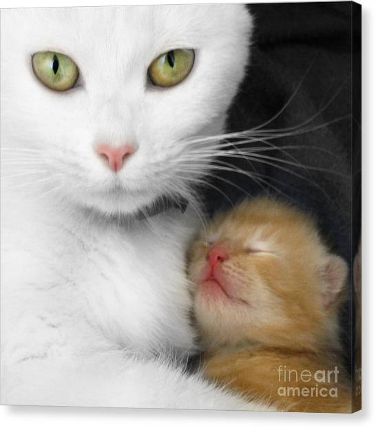 Proud Mother Canvas Print by Jo Collins