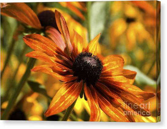 Proud Orange Canvas Print