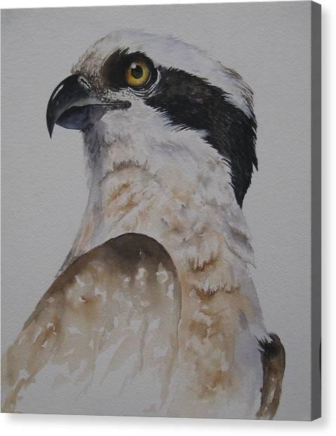Proud Osprey Canvas Print