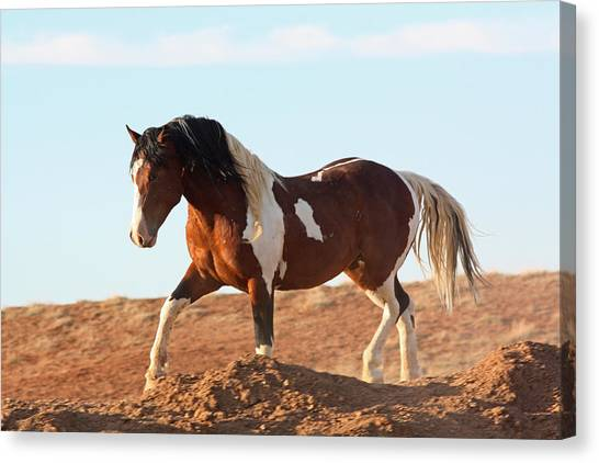 Proud Paint Mustang Canvas Print