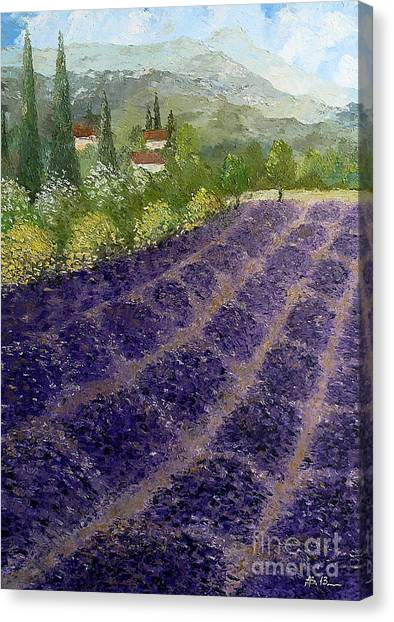 Provence Lavender Fields  Canvas Print