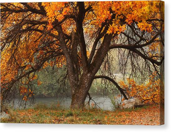 Provo Autumn #1 Canvas Print