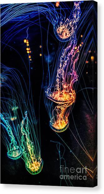 Psychedelic Cnidaria Canvas Print