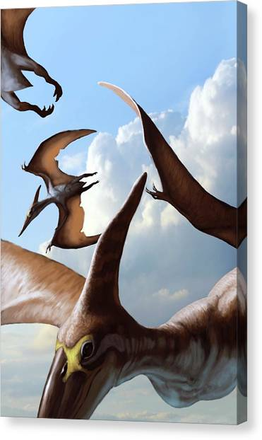 Pterodactyls Canvas Print - Pteranodon Pterosaurs In Flight by Jaime Chirinos/science Photo Library
