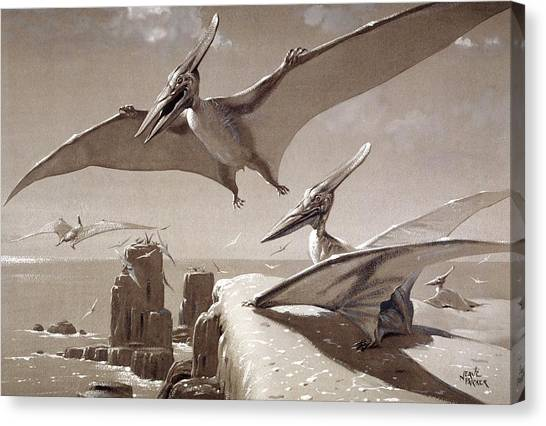 Pterodactyls Canvas Print - Pteranodon Pterosaurs by Natural History Museum, London/science Photo Library