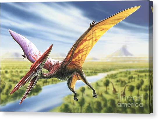 Pterodactyls Canvas Print - Pterodactyl by Adrian Chesterman
