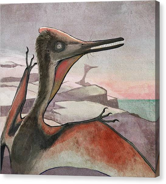 Pterodactyls Canvas Print - Pterodactyl Flying Reptile by Nemo Ramjet/science Photo Library