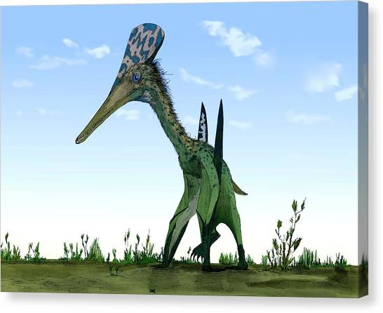 Pterodactyls Canvas Print - Pterodactylus by Mark P. Witton/science Photo Library