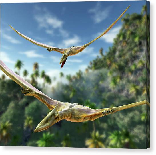 Pterodactyls Canvas Print - Pterosaurs Flying by Roger Harris