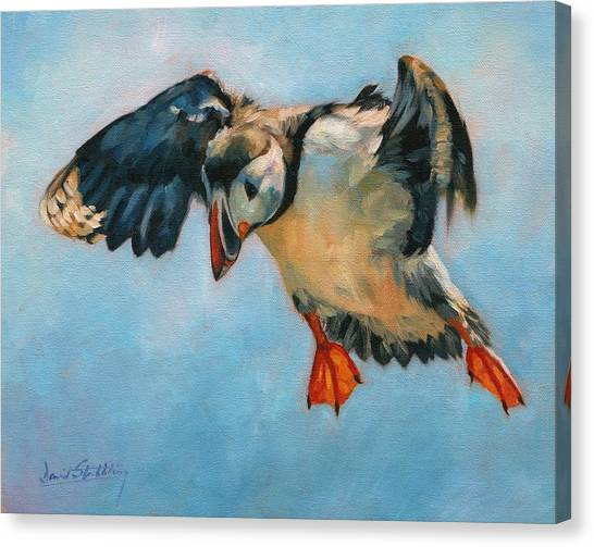 Puffins Canvas Print - Puffin by David Stribbling