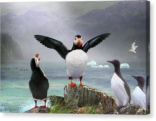 Razorbills Canvas Print - Puffin Pano by R christopher Vest
