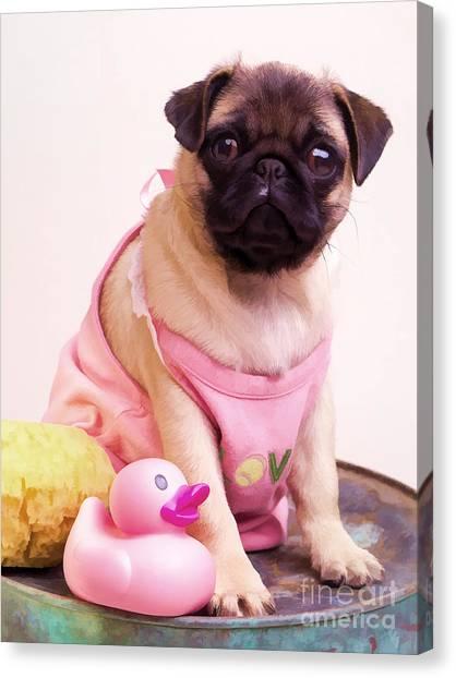 Pugs Canvas Print - Pug Puppy Bath Time by Edward Fielding