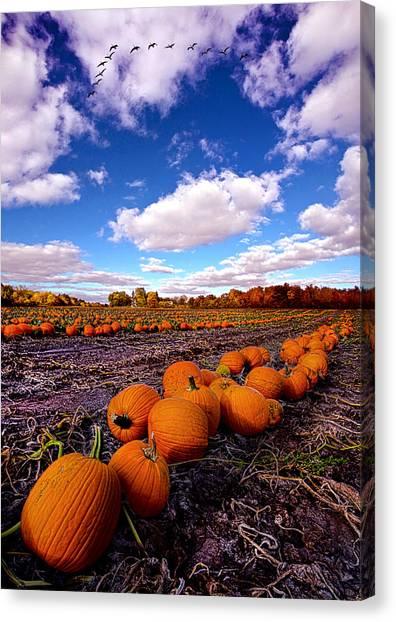 Pumpkin Patch Canvas Print - Pumkin Daze by Phil Koch